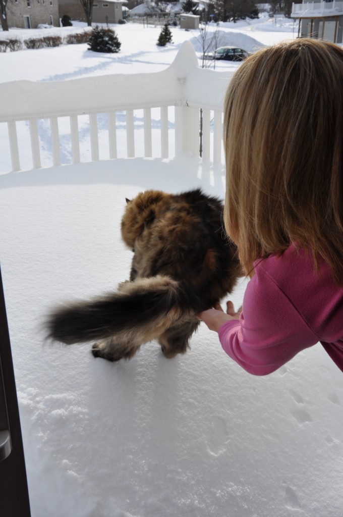 Yes. He's a HUGE cat! But does his fur make him so light he can stand on the snow?