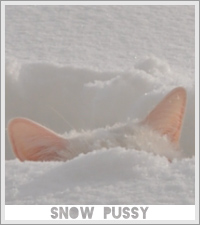 Snow Covered Pussies